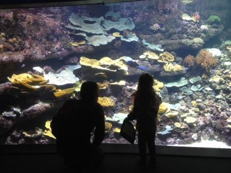 aquarium-paris-coeur-de-corail.2